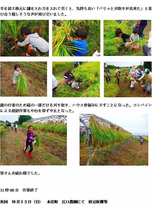 29年9月 稲刈り 2